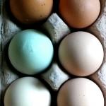 Grüne Eier!